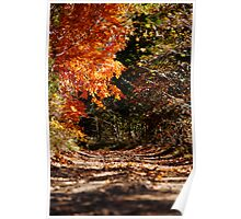 Walking Into Fall Poster