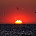 Sunset & Birds by Henry Jager