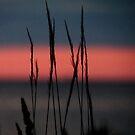 Minimal sunset by Bluesrose