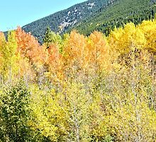 Colorado Fall Colors in the Aspen Trees by Amy McDaniel