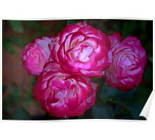 My rose bush Poster