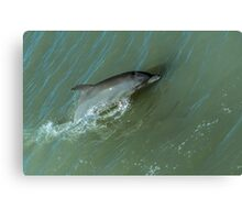 Bottlenose Dolphine Canvas Print