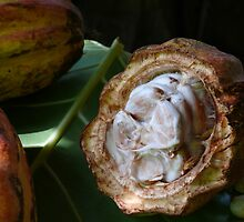 Inside the cocoa pod, Baracoa, Cuba by krista121