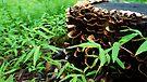 Mushroom Stump by Jessica Liatys