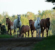 NNEP Horses II - Ottawa, Ontario by Tracey  Dryka