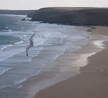 Wings over Watergate Bay by DebraD