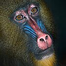 Mandrill&#x27;s Portrait by Henry Jager