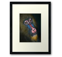 Mandrill's Portrait Framed Print