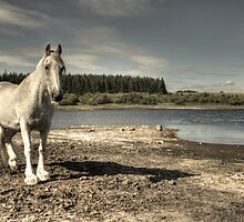 Neigh & thrice neigh by Rob Hawkins