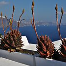 Plants in Oia by Peter Hammer