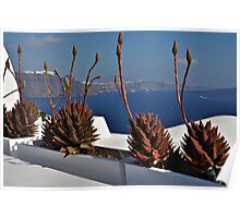 Plants in Oia Poster