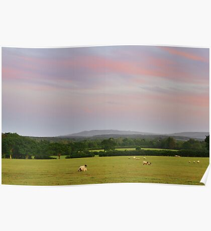 Sheep in the sunset Poster