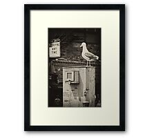 They're Kidding...Right? Framed Print