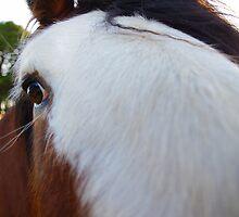 George The Horse by Jessica Hooper