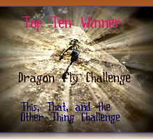 Banner for Top Ten Winner - Dragon Fly by quiltmaker