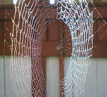 wet web by Oil Water Artt