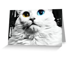 How do you like me now? Greeting Card