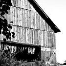 Tobacco Barn  by DearMsWildOne