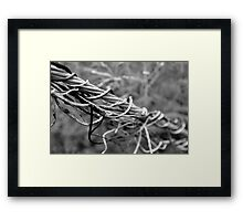 Wire Branches Framed Print