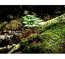 Blooming Moss Photographic Print