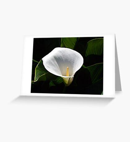 Calla Lily Greeting Card
