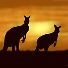 Kangaroos at Sunset by SophiaDeLuna