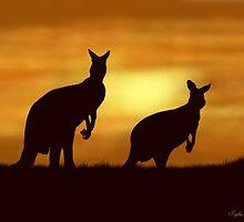 Kangaroos at Sunset by SophiaDeLuna