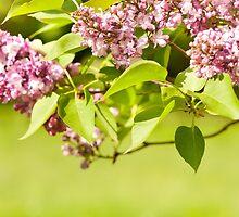 Lilac bloom vibrant pink shrub by Arletta Cwalina