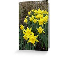 Daffodils in Woodland Greeting Card