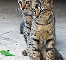 Kitten duo by IngeHG