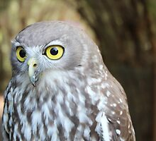 Barking Owl by Sophie Pittaway