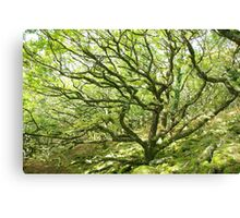 Wistman's Wood Canvas Print