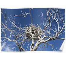 Nest in Dead Tree... Poster