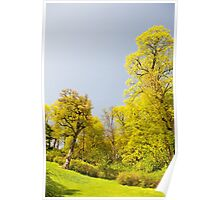 Green spring trees vibrant nature Poster