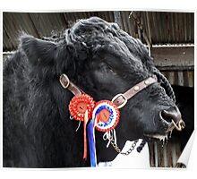 Prize Bull Poster