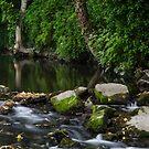 River Tolka, National Botanic Gardens, Dublin by Martina Fagan