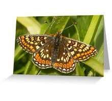 Marsh Fritillary Greeting Card