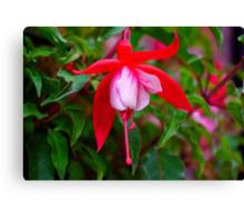 Fuchsia   #1 Canvas Print