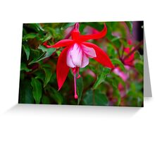 Fuchsia   #1 Greeting Card