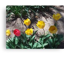 Tulips In Spring Canvas Print