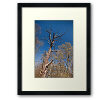 Old dead trunk decayed tree Framed Print