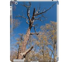 Old dead trunk decayed tree iPad Case/Skin