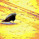 Psychedelic crow on the trail by steppeland