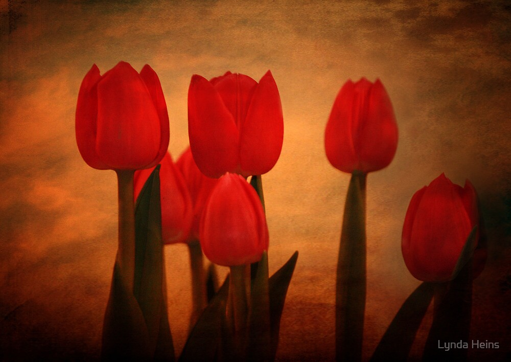 ~ Tulip Sunrise ~ by Lynda Heins