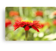 Red cap sideview Canvas Print