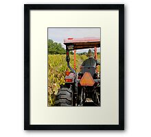 Farmer and His Vines Framed Print