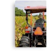 Farmer and His Vines Canvas Print