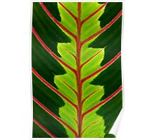 Green leaf with red veins  Poster