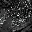 Tears of nature... by LadyPixbo