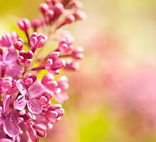 Lilac flowerets blooming bright by Arletta Cwalina